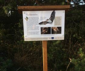 Bike nature trail sign about bats, När, Gotland