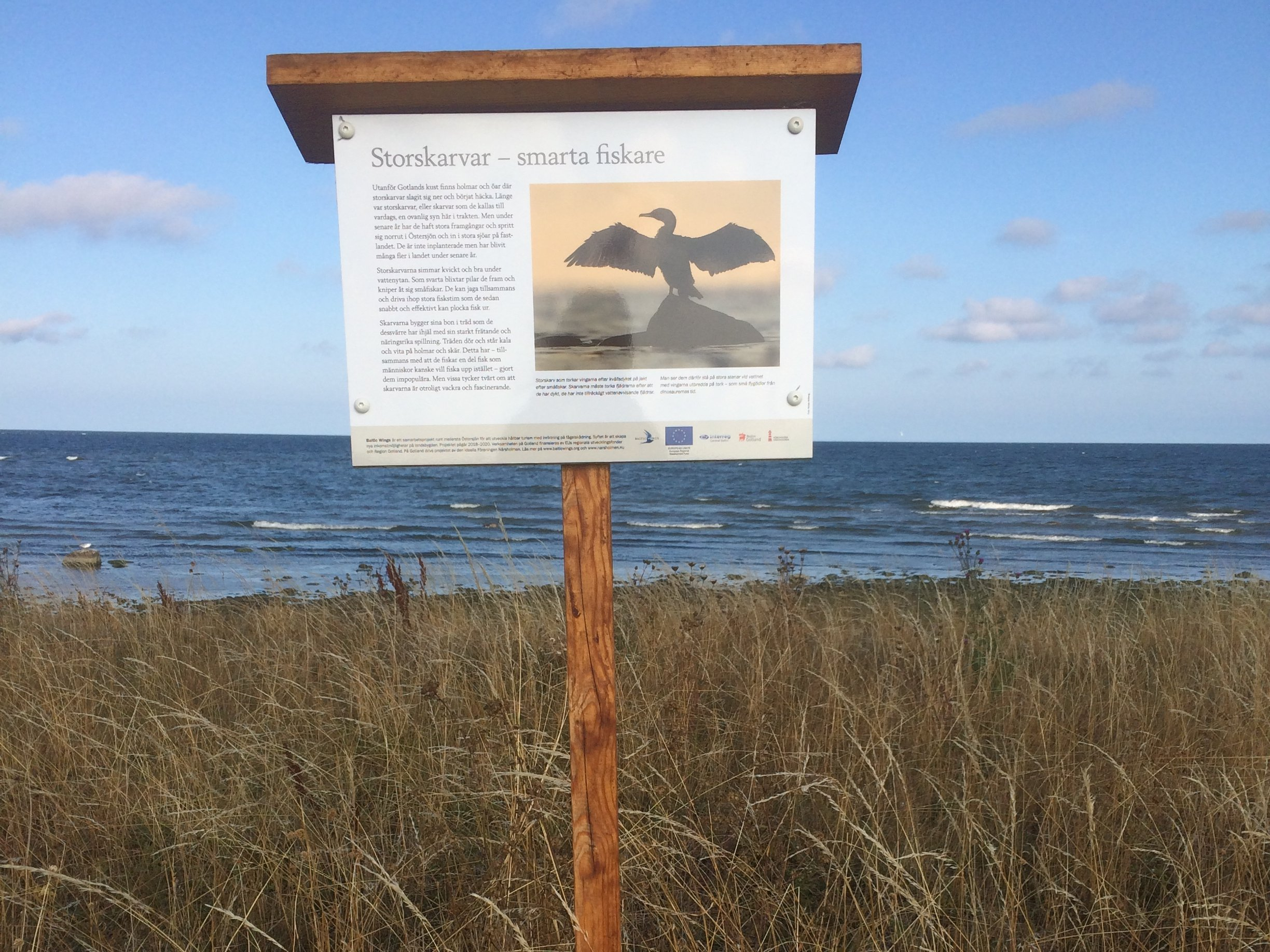 Bike nature trail sign about cormorants, När, Gotland